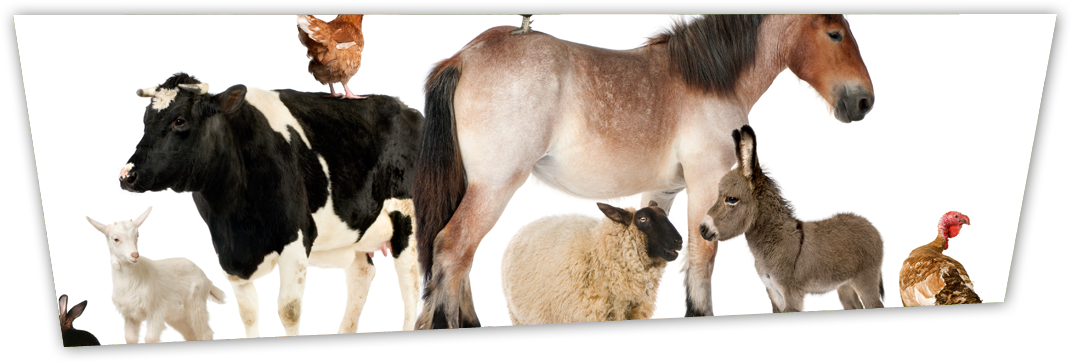 Animal Rentals Rent Farm Animals